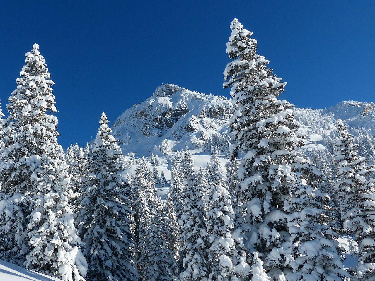 Langlaufen in Tirol Entdecken